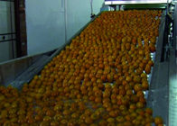Intelligent Vegetable Fruit Production Line Automatic Packaging Conveyor Systems